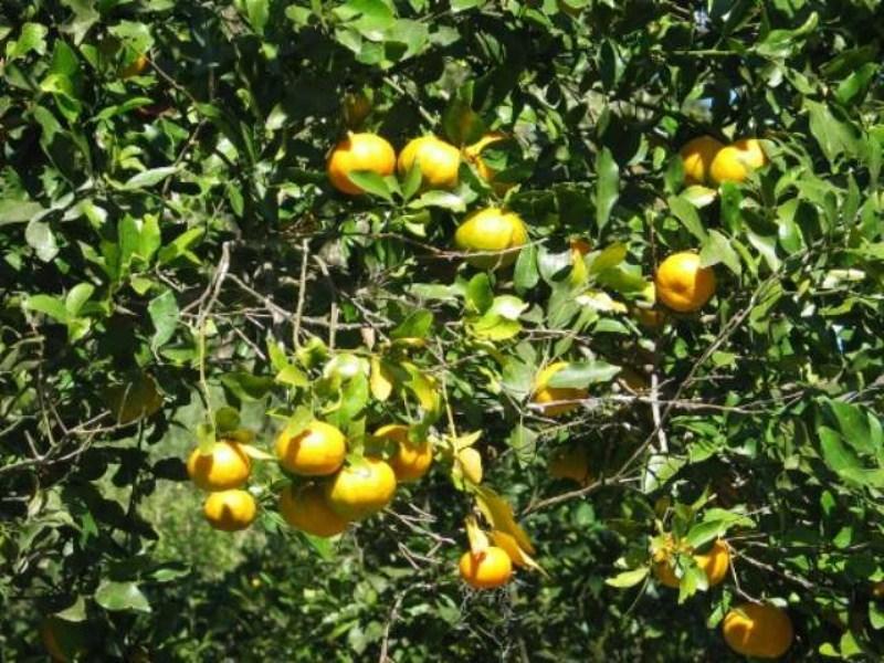 fruta_laranja